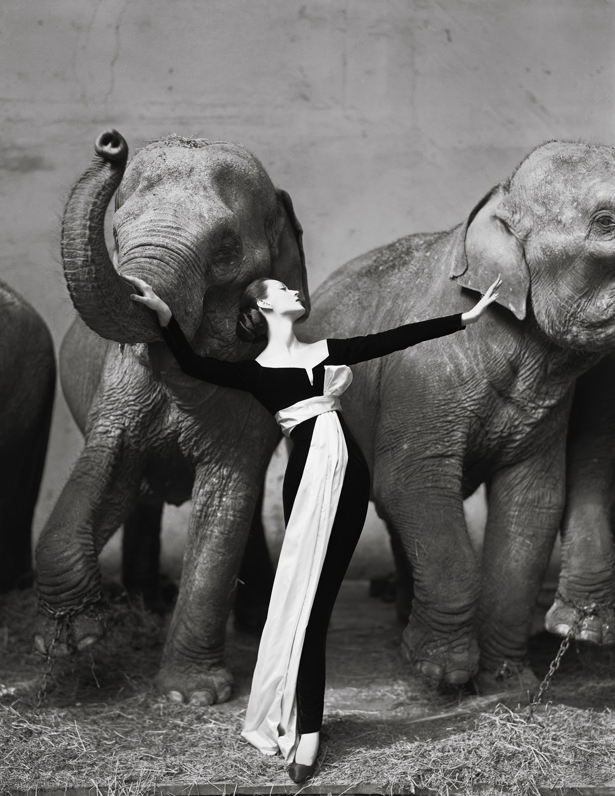 Most Expensive Photographs Ever Sold, Dovima with elephants, Evening dress by Dior, Cirque d'Hiver, Paris, August 1955