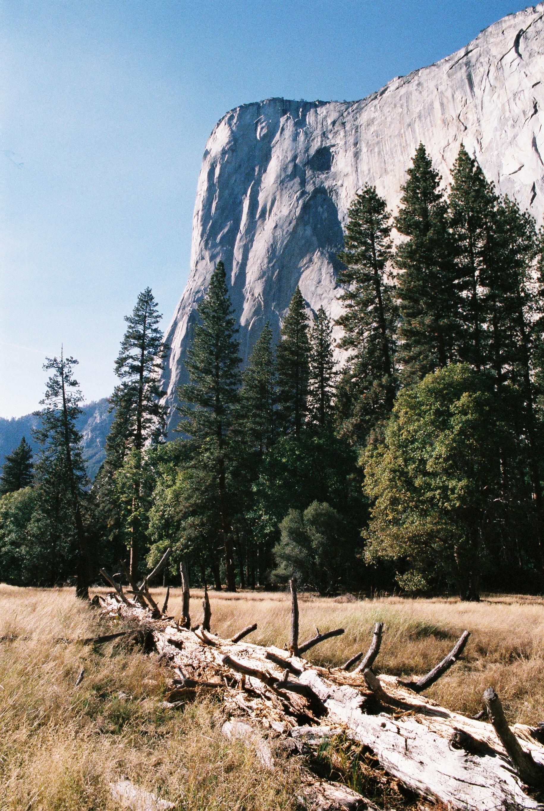 Yosemite National Park, California, USA   Olympus OM-2n
