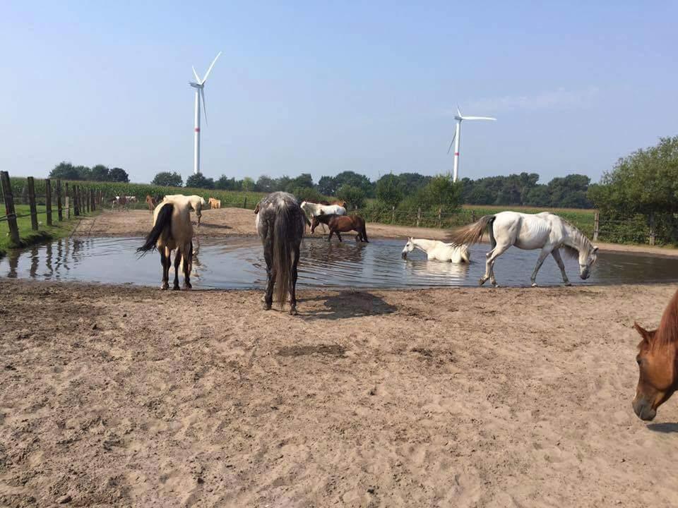 Als paarden mogen kiezen dan nemen ze op warme dagen graag een bad.