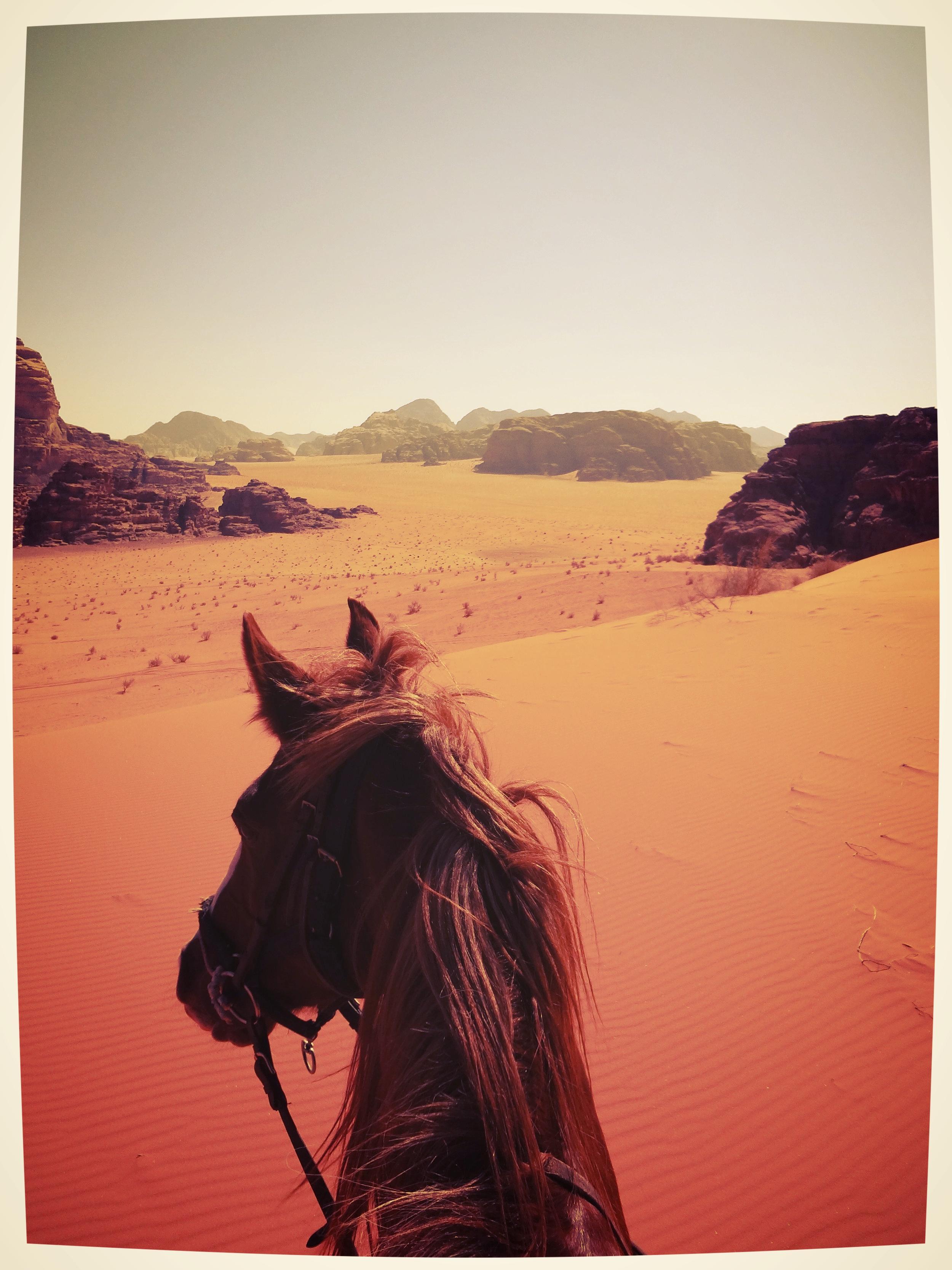 Een brullend vuur - Het spreekt voor zich dat de ervaring in Marokko fantastisch was en er volgden al heel snel vele reizen te paard over de hele wereld. De waakvlam was opnieuw aangewakkerd tot een brullend vuur dat niet meer te blussen viel. Turkije, Marokko, Jordanië, Kirgizië, ... hoe langer in het zadel, hoe liever! En tussen de reizen door ging ik naar de manege in de buurt. Als één van de weinige 'oudere paardenmeisjes' reed ik op verschillende paarden, elke keer een andere. Nieuwe paarden werden eerst gelongeerd en dan één of ander zadel erop en hoppa, rijden maar. Ik werd er steeds vaker afgegooid. Op een avond lag ik er al na 5 minuten af en ik zat op de grond toe te kijken hoe de instructrice, samen met een toeschouwer, het bewuste paard in de hoek dreven en hard rukten aan de teugels (en dus het bit) om het dier te straffen.Op dat bewuste moment ging mijn knopje om. Dit wilde ik niet meer, op die manier wilde ik niet meer met paarden omgaan. Met mijn andere dieren ging ik toch ook niet zo bruut om?