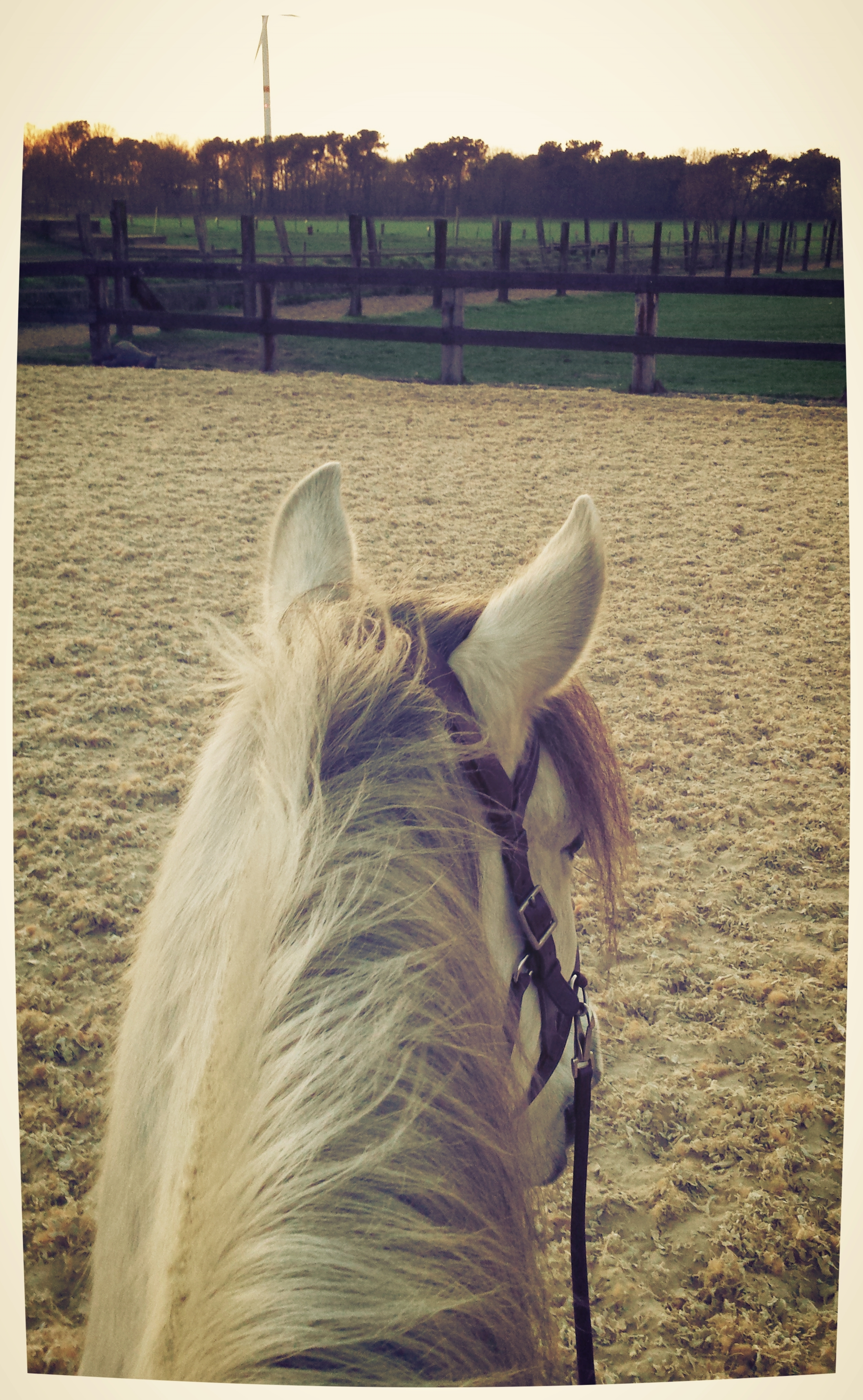 PRE bitloos rijden barbara hoekstra natural horsemanship
