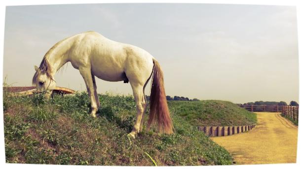 promotie natural horsemanship.jpg