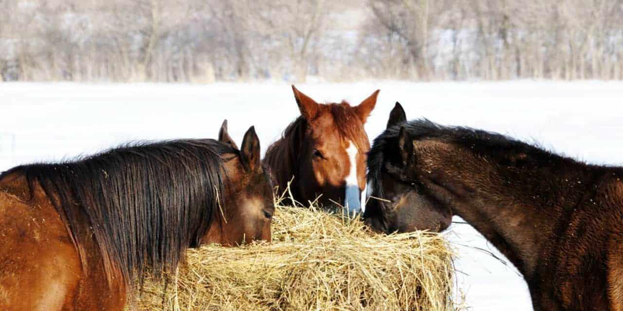 Een paard moet langer en meer kauwen op ruwvoer. Daardoor ontstaat meer speeksel dat het maagzuur neutraliseert en de productie ervan controleert. Zo ontstaan er geen maagzweren.
