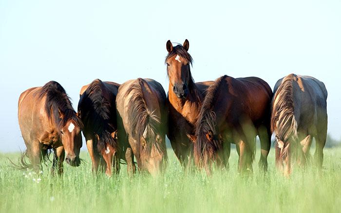 Een paard eet ongeveer 3 tot 4 kilo gras per uur op een een weide met graslengte van > 5 cm.