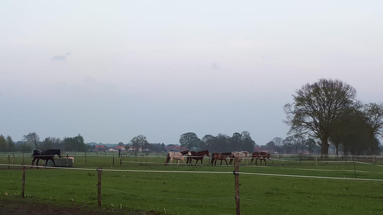 trekkende paarden