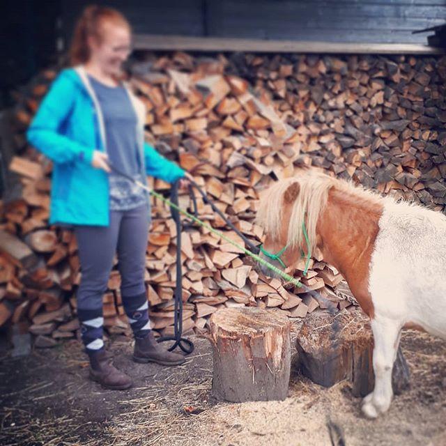 Als het regent moeten we maar even iets onder de bomen doen. #Targetting is een leuke manier om je #pony meer zelfvertrouwen te geven in zijn voeten. . . #shetlander #naturalhorsemanship #natuurlijkpaardentrainen #staytruetoyourhorse