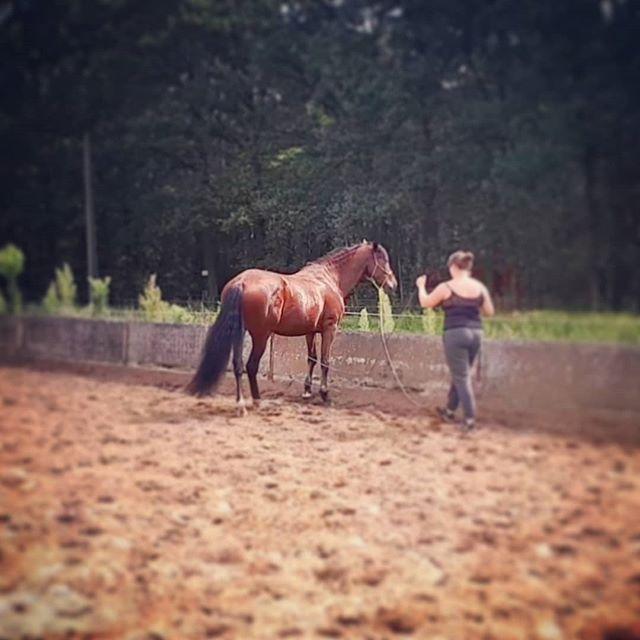 Als een #paard goed zijwaarts kan, dan kan hij de rest ook goed. Soepelheid in het lijf en goede coördinatie van voetenwerk is een goede oefening! . . #naturalhorsemanship  #grondwerk  #purarazaespañola  #staytruetoyourhorse  #groundwork