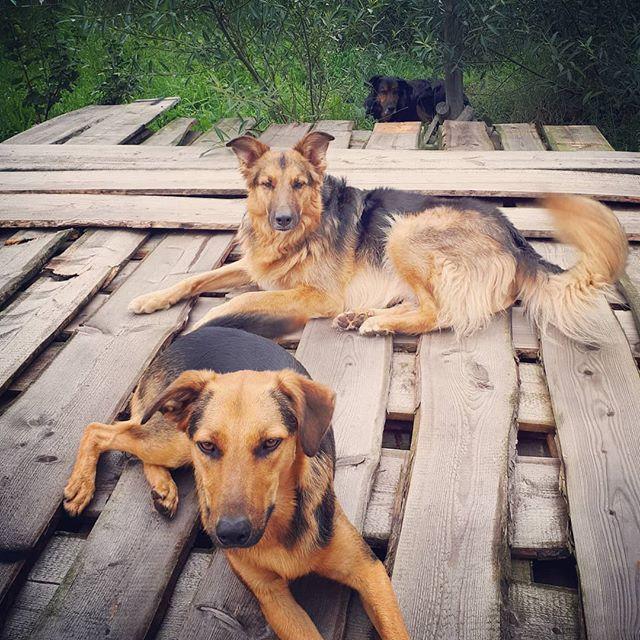 3 op een rij! . . #asielhond #shelterdog #rescuedogsofinstagram #spanishdog