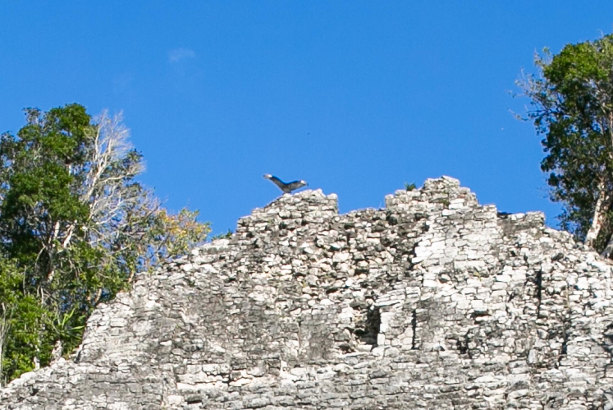 Zona Arqueológica de Coba (Fig 19)