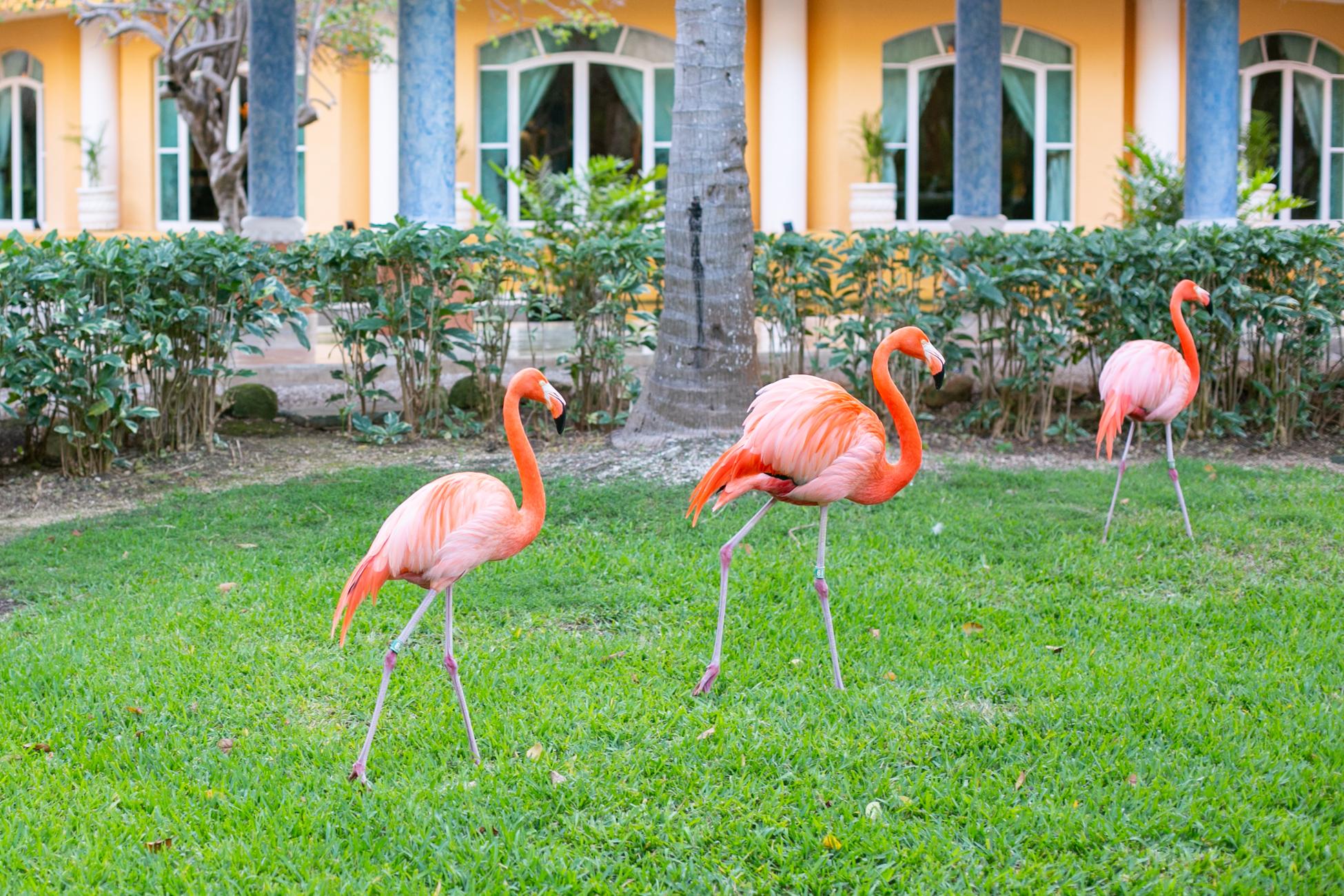 Parade of Flamingos