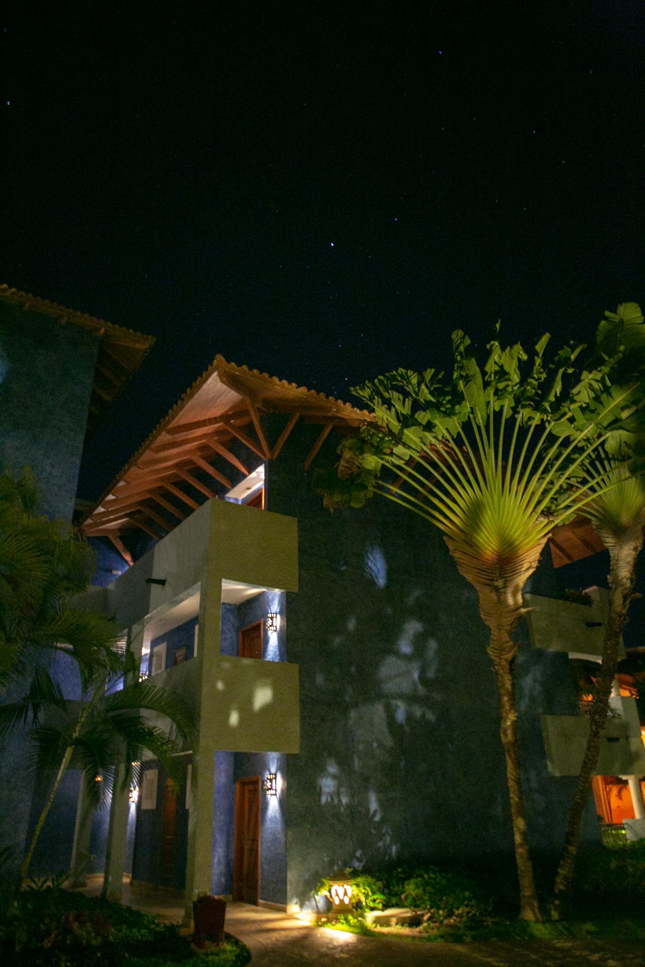 Midnight mega fern by our doorstep.