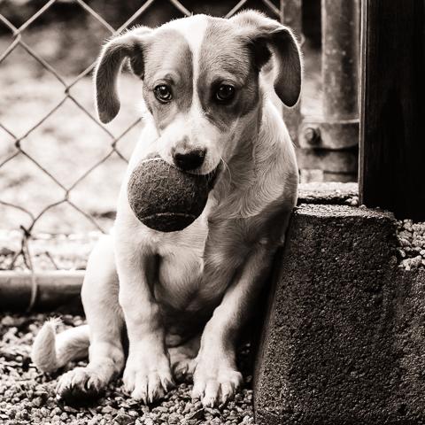 My Ball - Puppy Love Juried Show, Hathaway Contemporary Gallery, Atlanta, Georgia