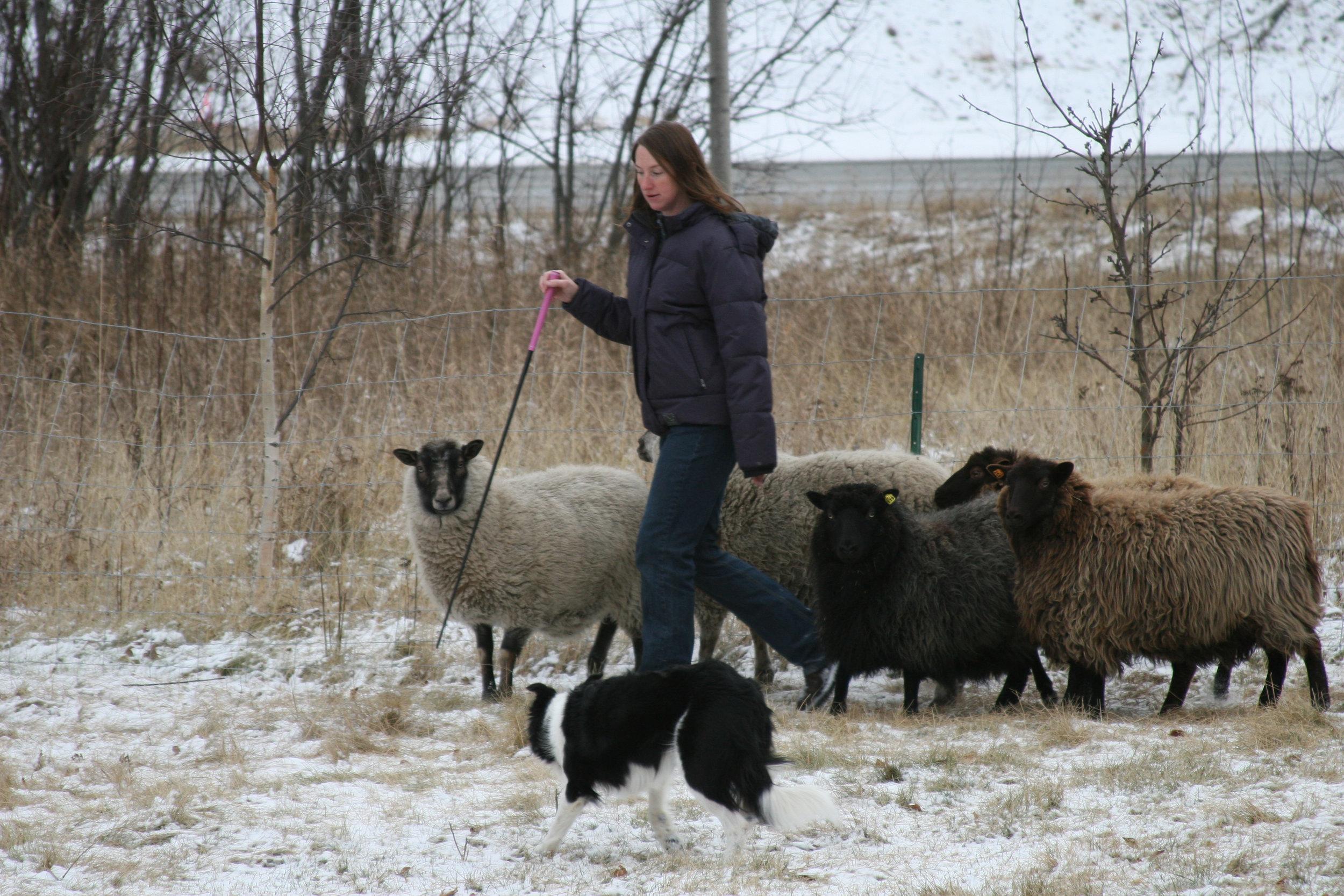 me and Jill sheep.jpg