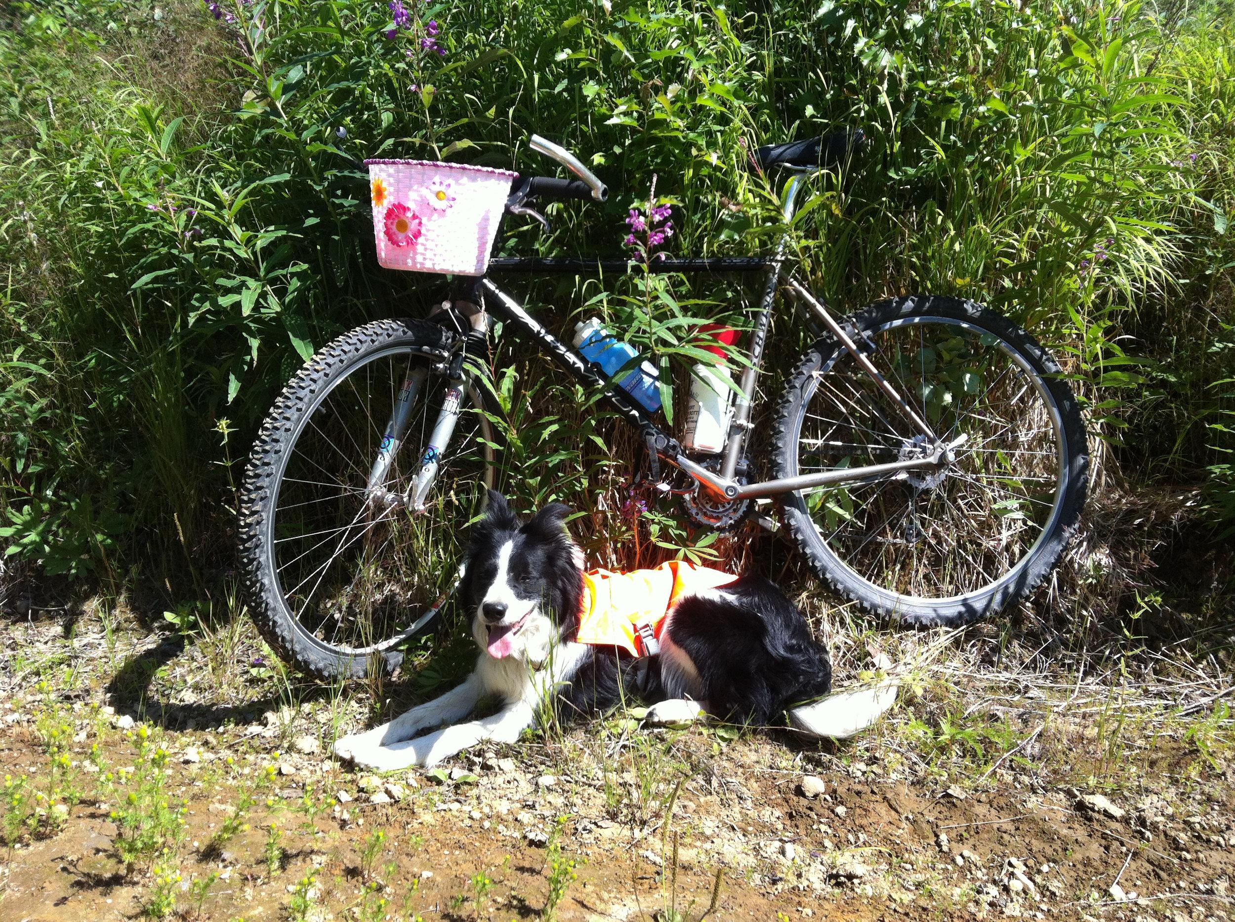 mountain bike rest.jpg