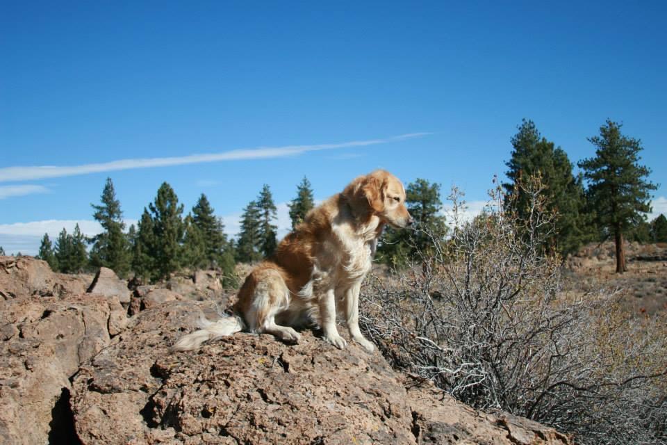Tucker in CA desert.jpg