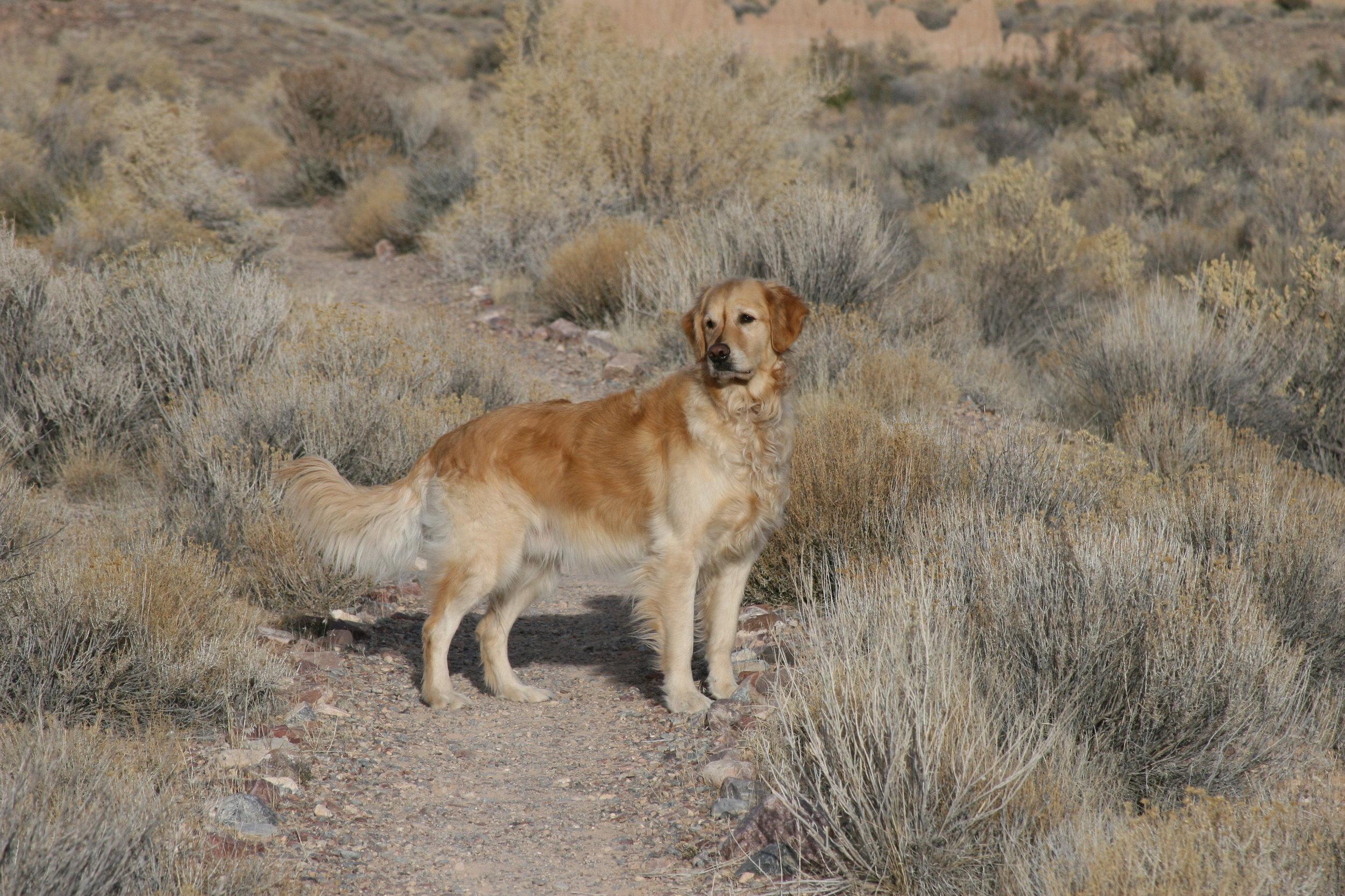 Tucker handsome in desert.jpg