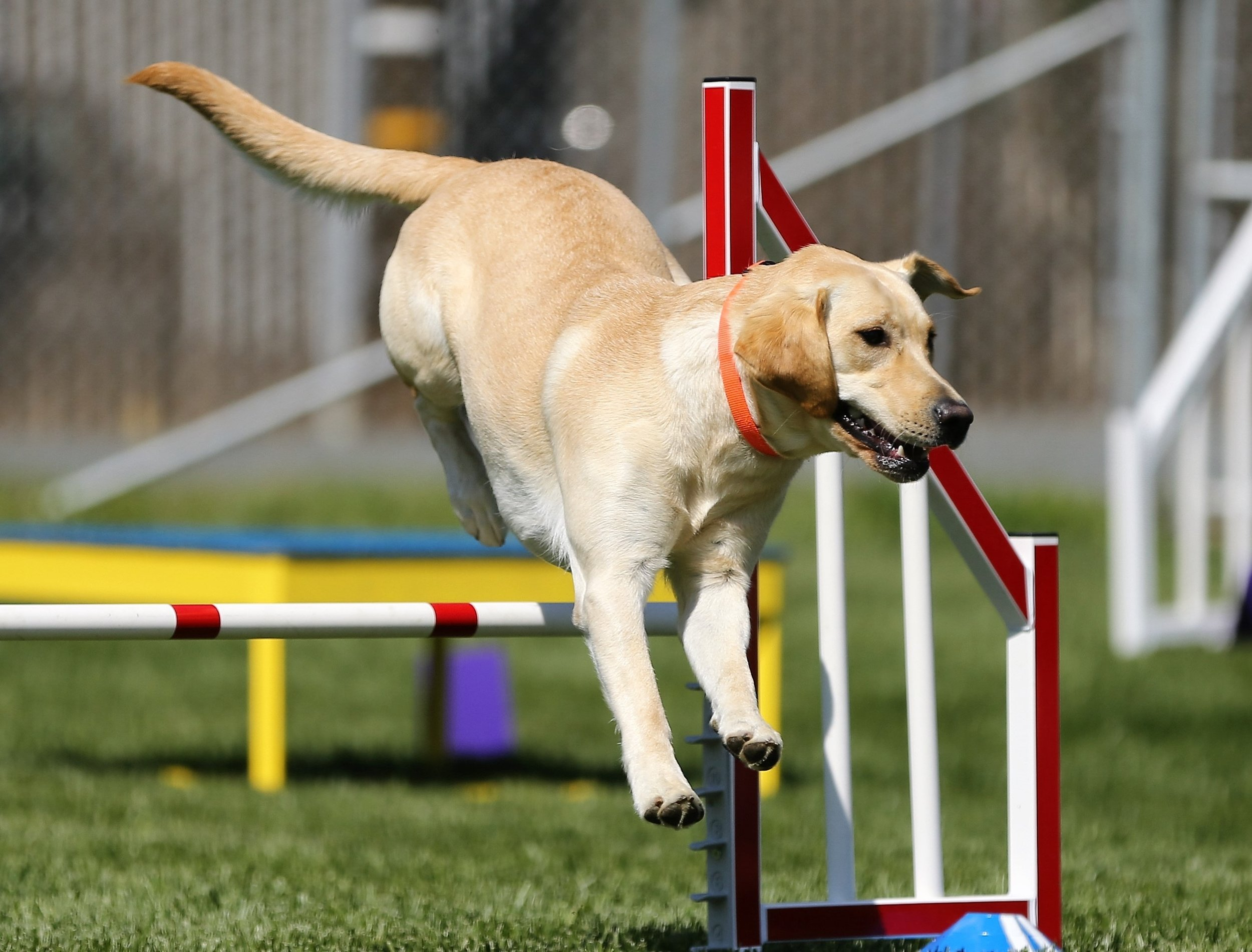 Dogs naturally love to jump!