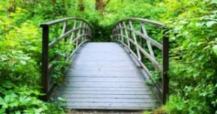 Aleph pathway