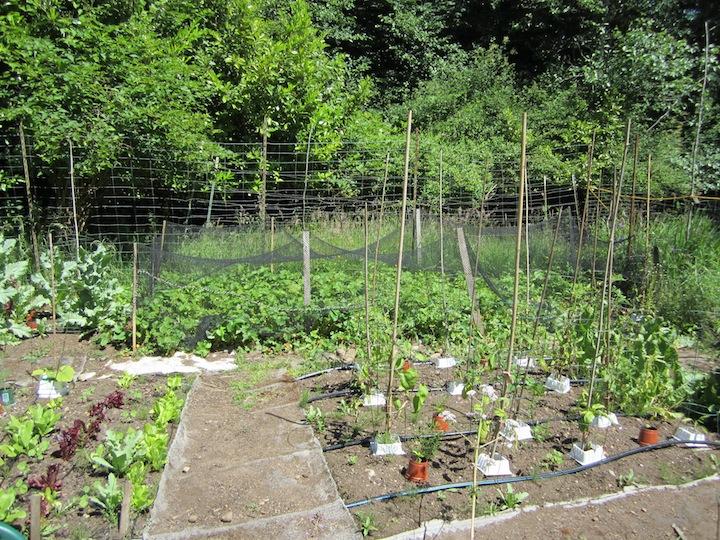 Birkat-HaShanim•Our-Garden.jpg
