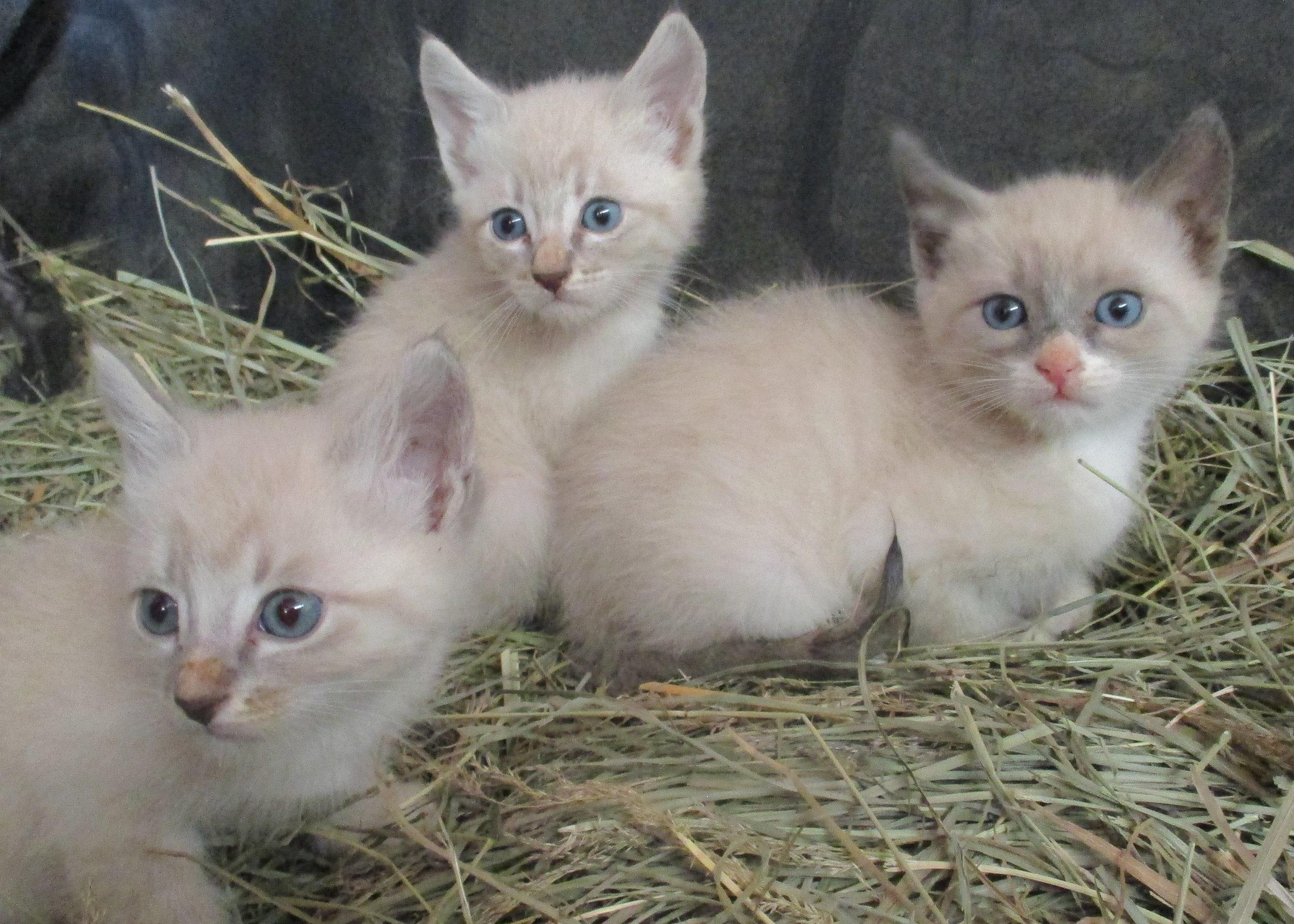 7-19 kitten 5.JPG