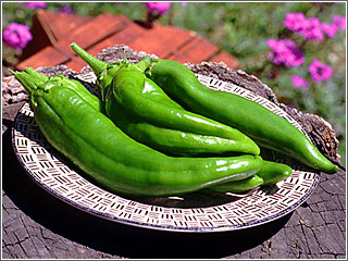 green_chile-hatch-pueblo.jpg
