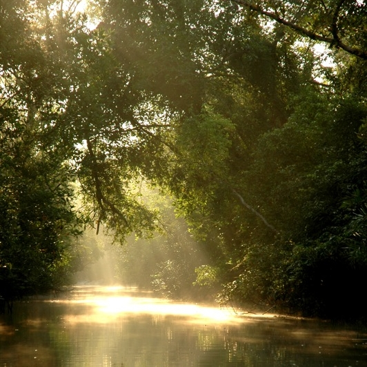 The largest mangrove forest in the world- the  Sundarbans
