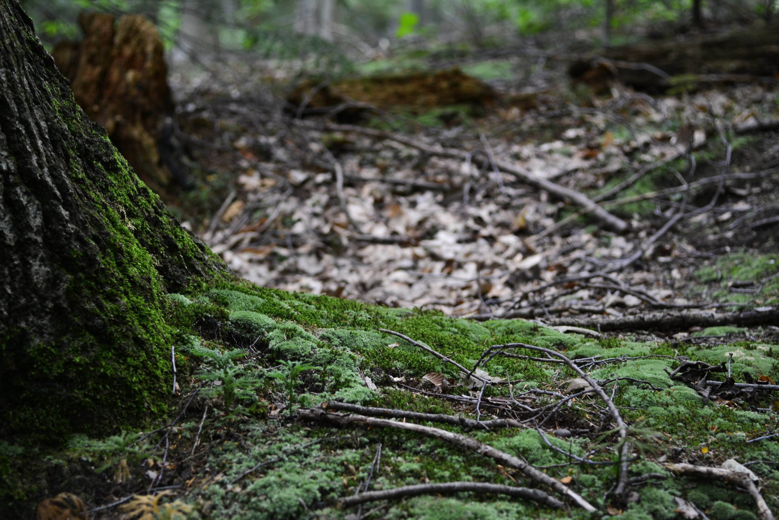 The forest floor is heavily influenced by time