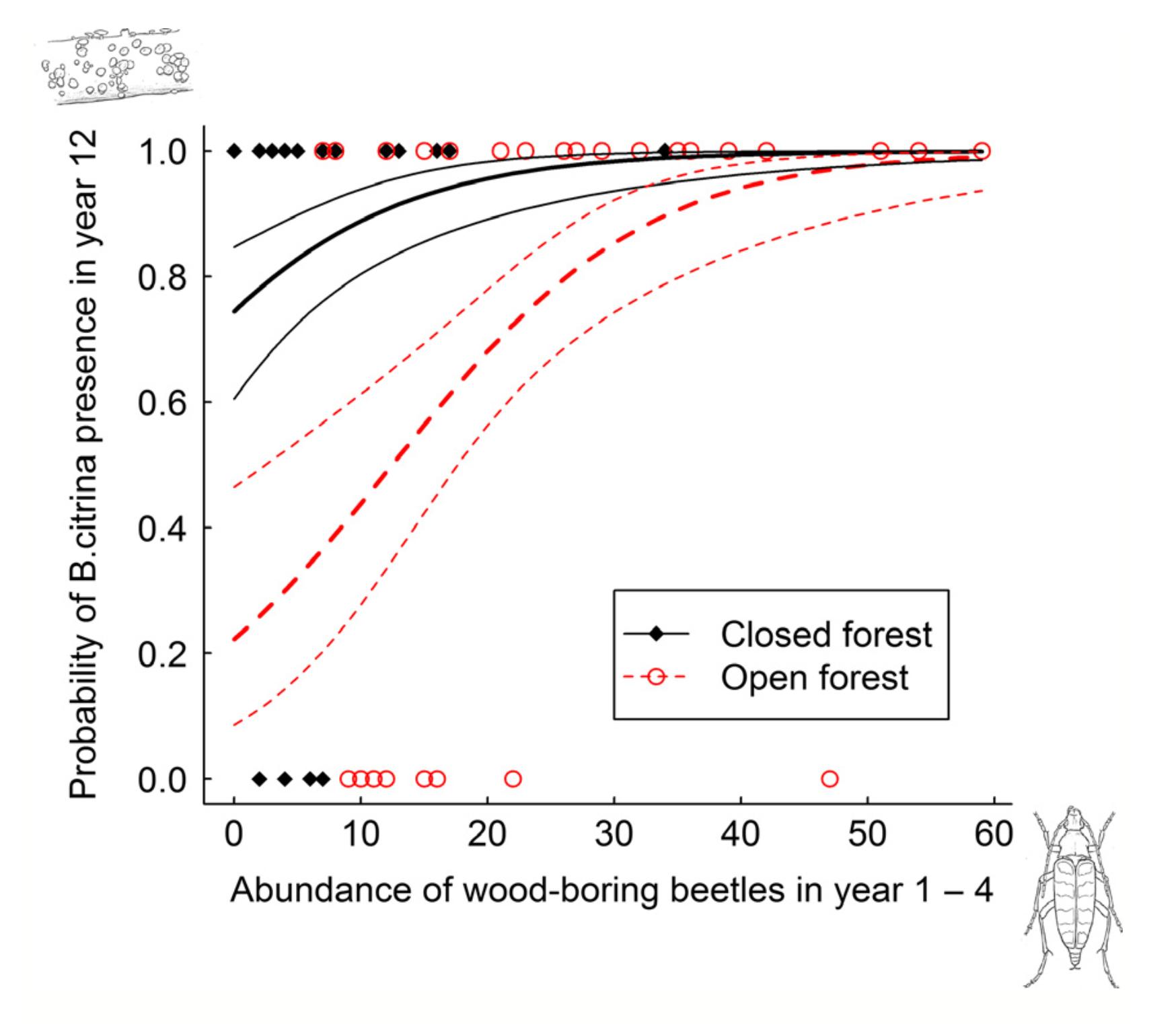 Bisporella citrina  is enhanced with the presence of wood-boring beetles. Jacobsen et al. 2015.