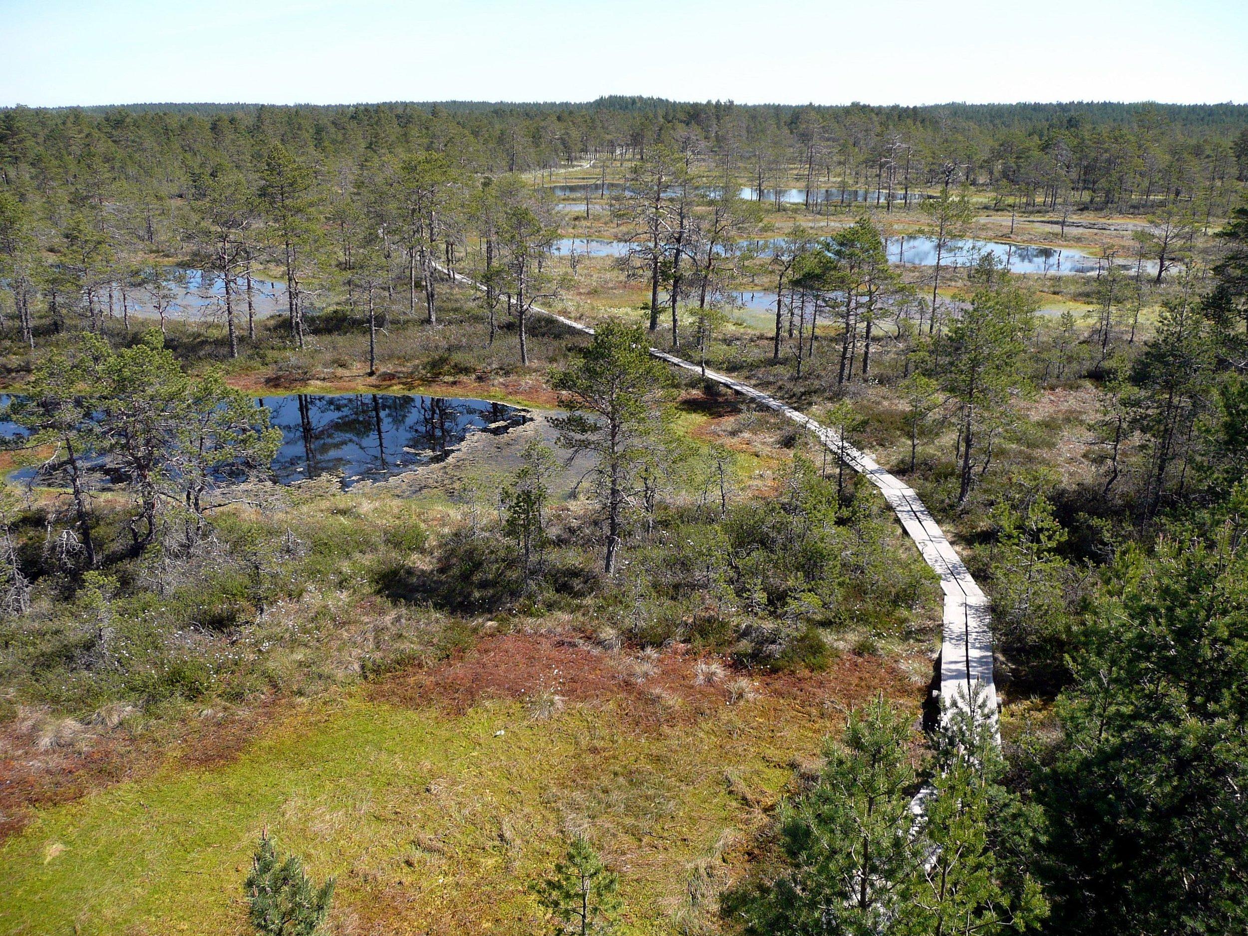 A raised bog called Viru Bog in  Lahemaa National Park  ,  Estonia .