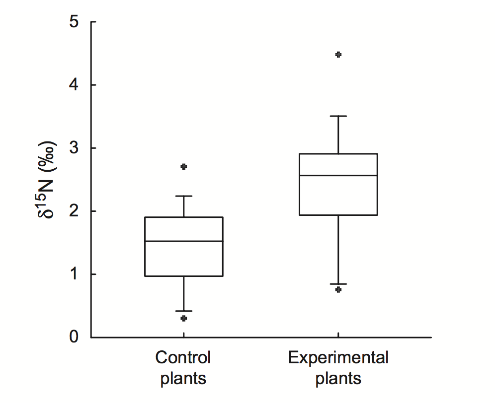 When symbiotic ants were fed more insects, leaf tissue nitrogen increased.  Leroy et al. 2012 .
