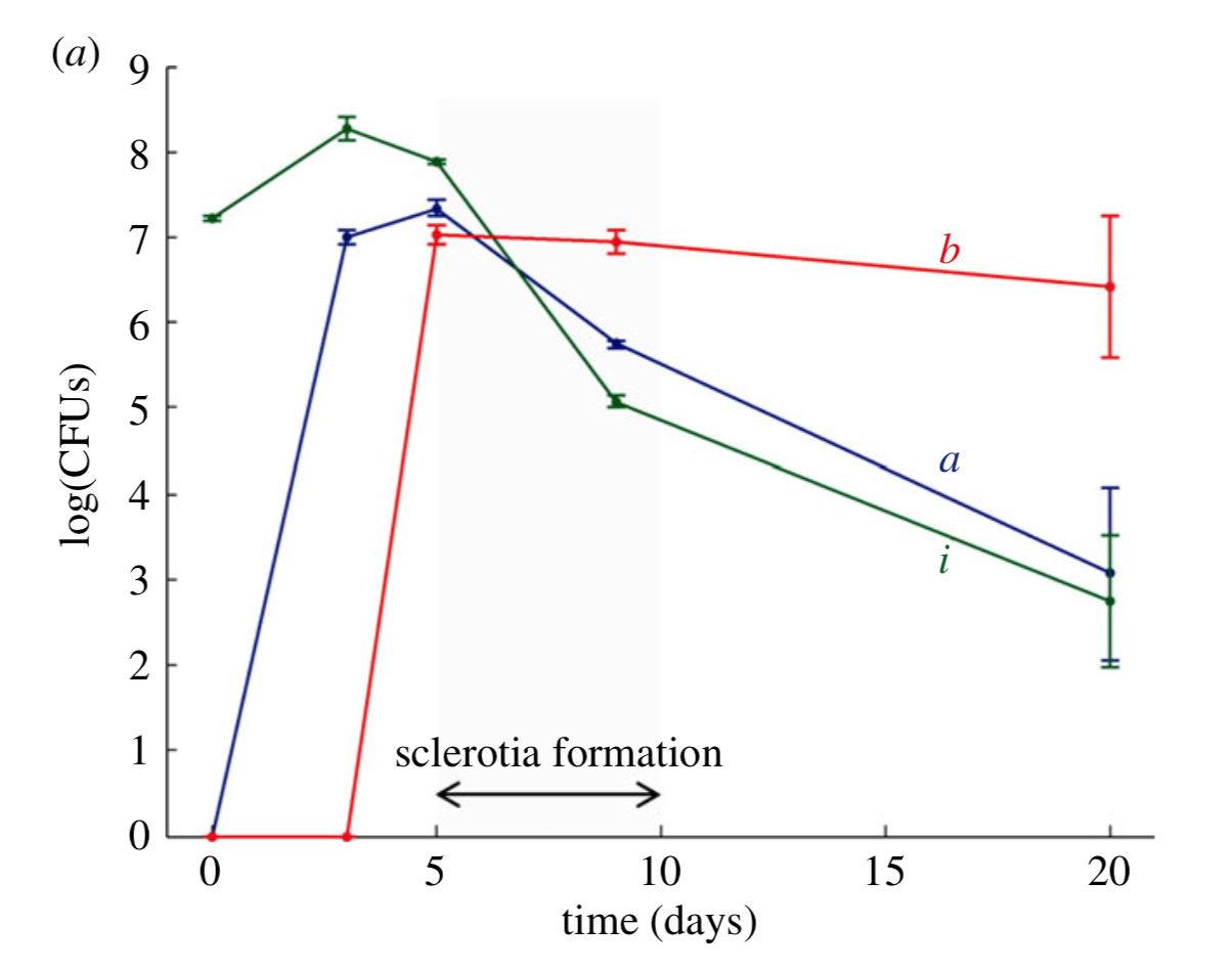 Bacterial colonies are significantly reduced during the harvesting phase while fungal sclerotia form. Pion et al. 2013 .