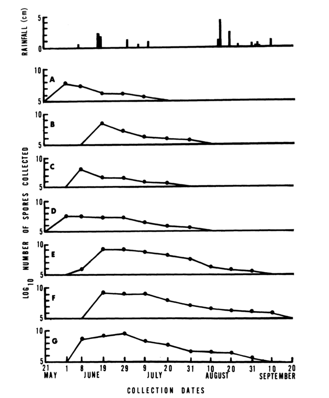 Spore dispersal timing in 7 specimens of veiled polypores. The species is most active in the dryer portion of the year. Harrington 1980 .