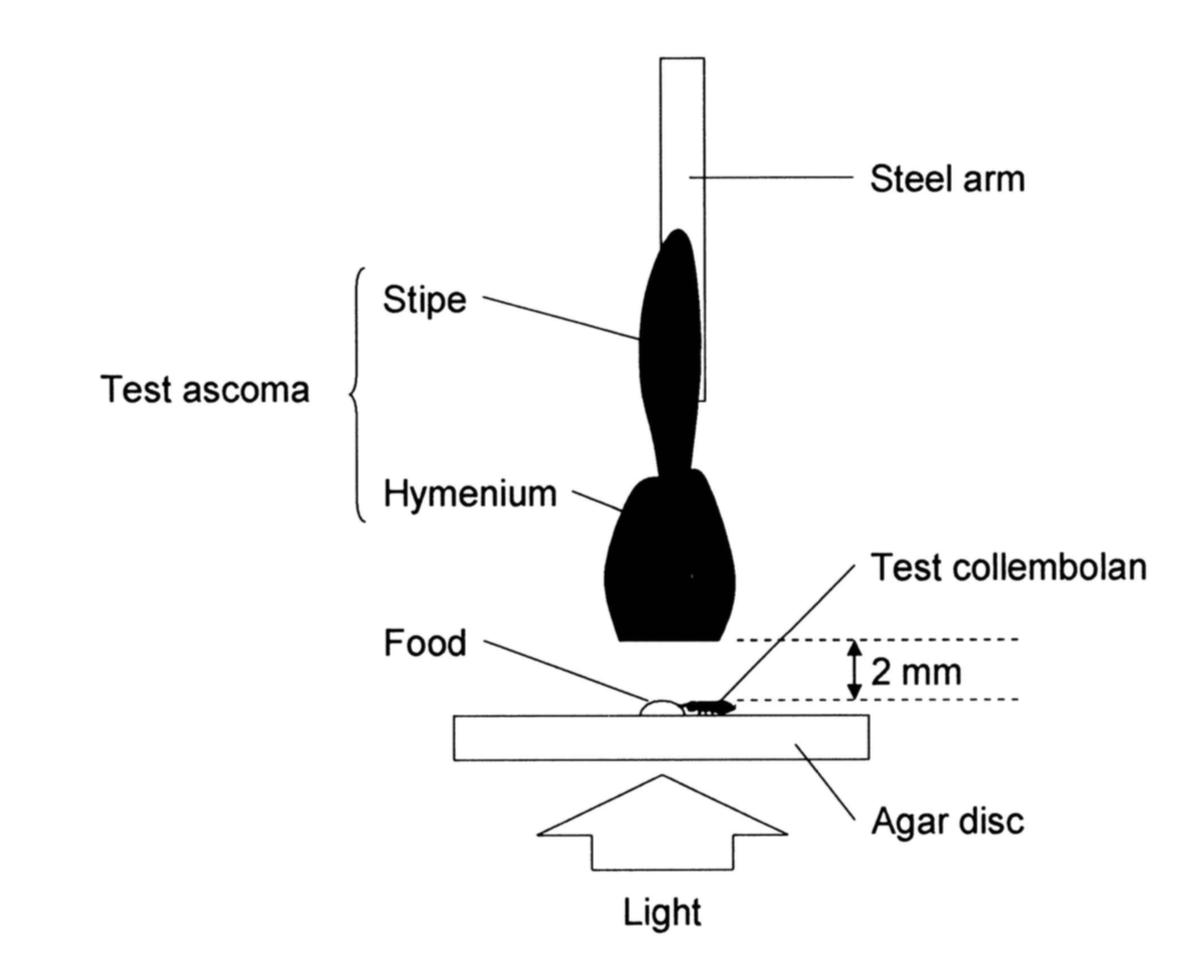 Experimental design of Nakamori and Suzuki 2006.
