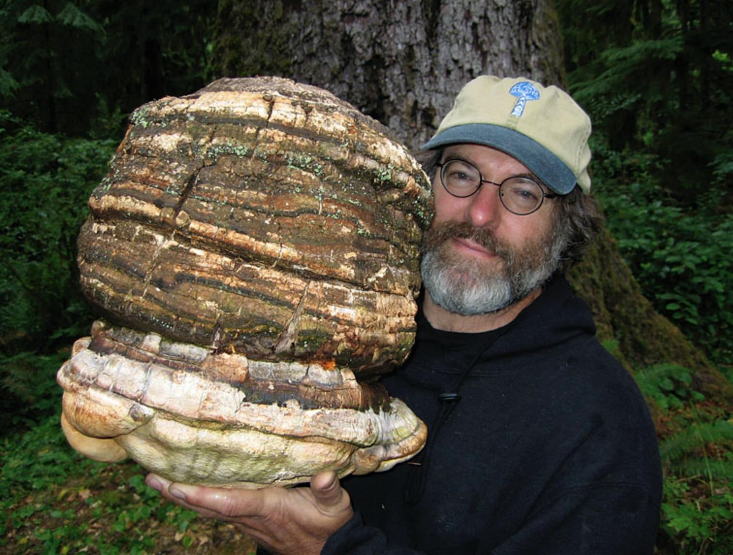 Paul Stamets, American mycologist holding an Agarikon mushroom.