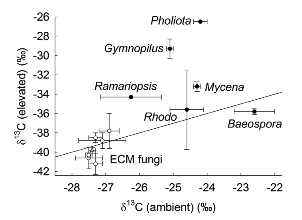 Baeospora myosura  has higher concentrations of Carbon 13 compared to other saprotrophs (black circles) and ectomycorrhizal fungi (white circles).   Hobbie et al. 2014 .