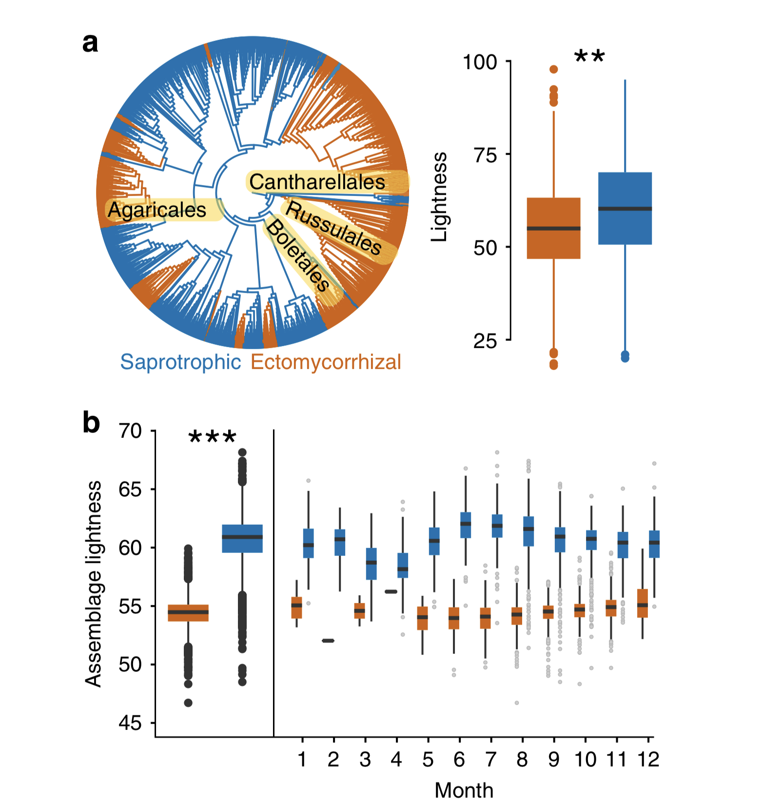 Difference in color lightness as a function of nutritional modes. Ectomycorrhizal fungi are generally darker in pigmentation. Saprotrophic species show a seasonal shift in color, becoming darker in colder months.  Krah et. al 2019 .
