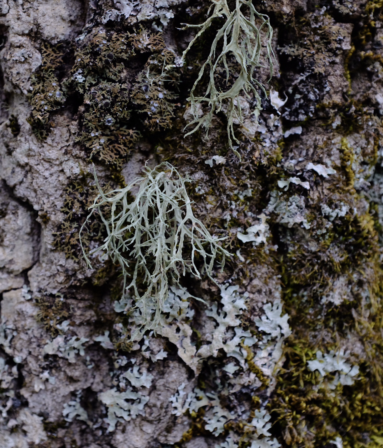 Lichens from the Nebrodi National Park.