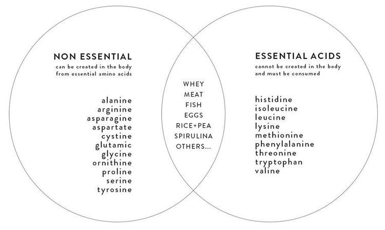 essential-non-essential-amino-acids.jpg