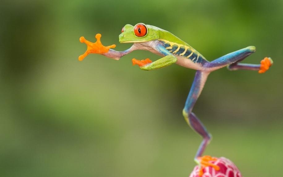dancing frog.jpg