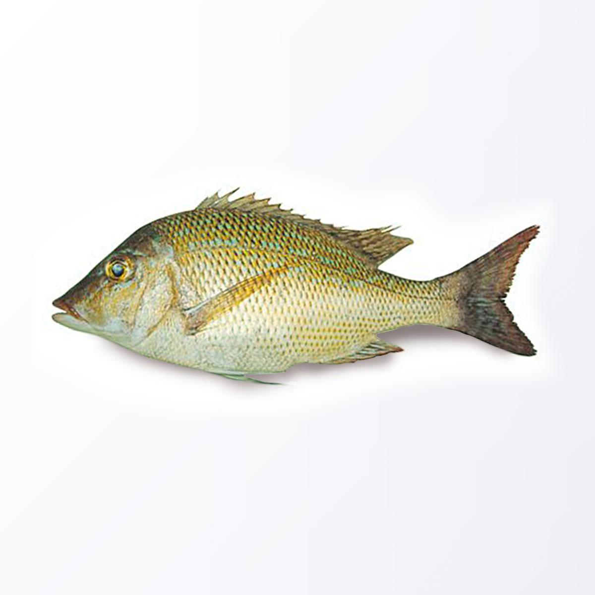 EMP104-Emperor-Fish.jpg