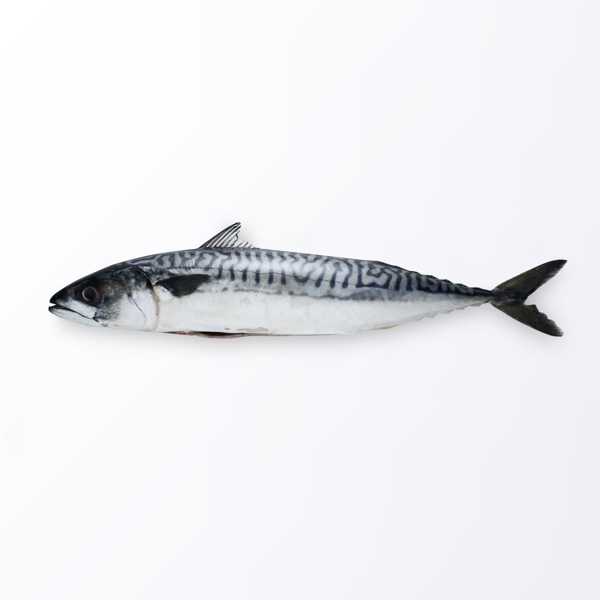 MAC122-Mackerel-Saba.jpg
