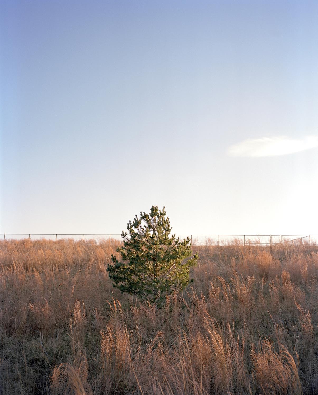 14-tree 2 copy(web).jpg