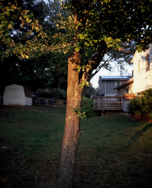 28-mrs b tree(master)(13x19 erb)(web).jpg