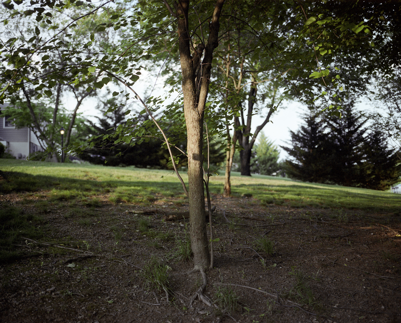 side yard tree().jpg