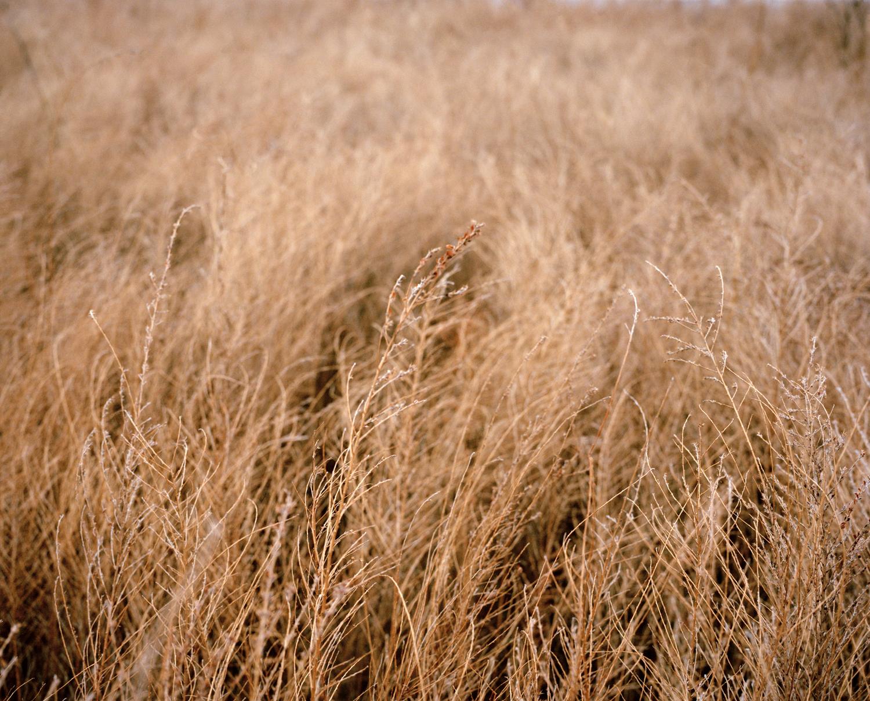 25-tall grass 1.jpg
