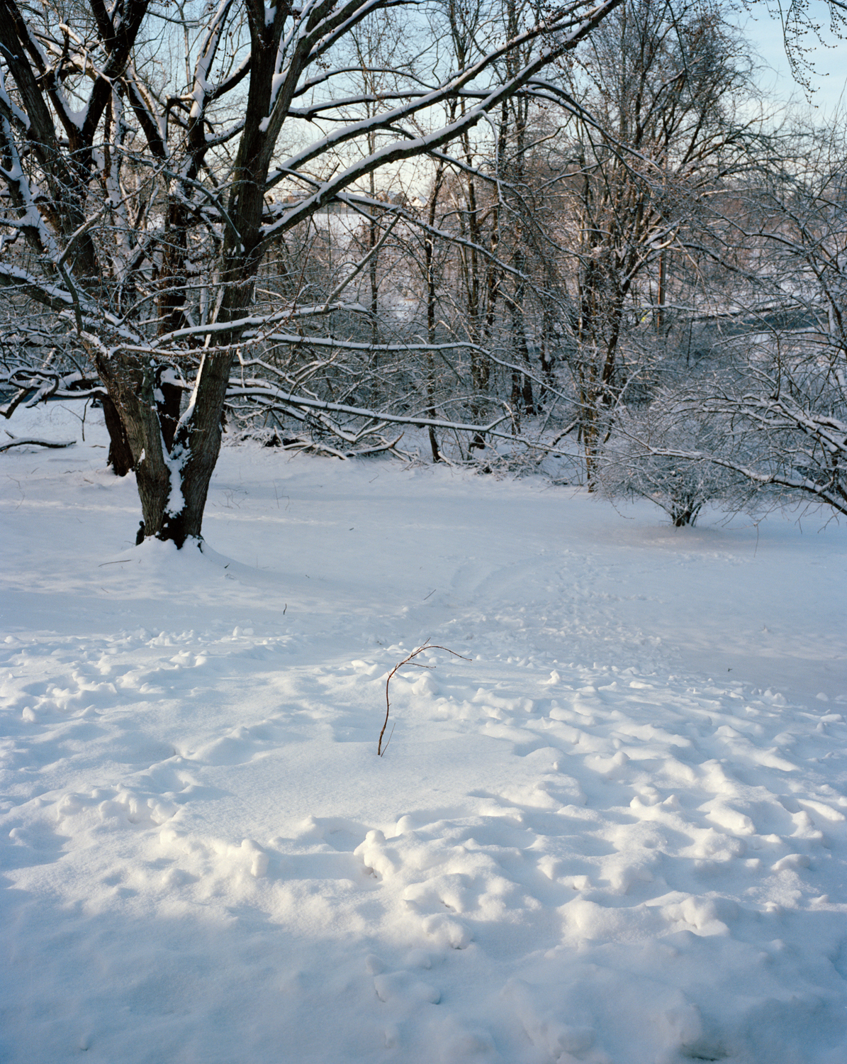 36-Little Tree in Snow.jpg