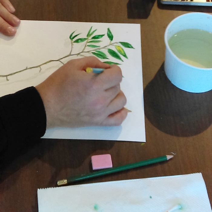 Nature Drawing Workshop - An introduction to drawing and painting in watercolor using natural subjects.