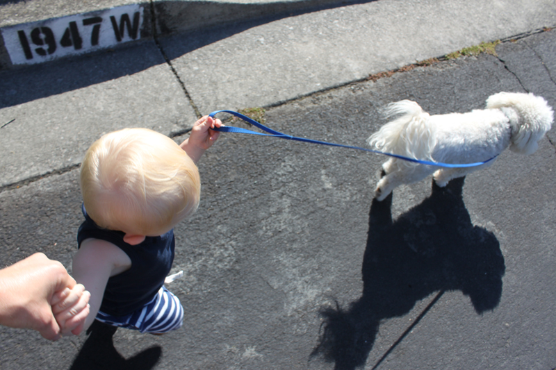 walkthedog.jpg