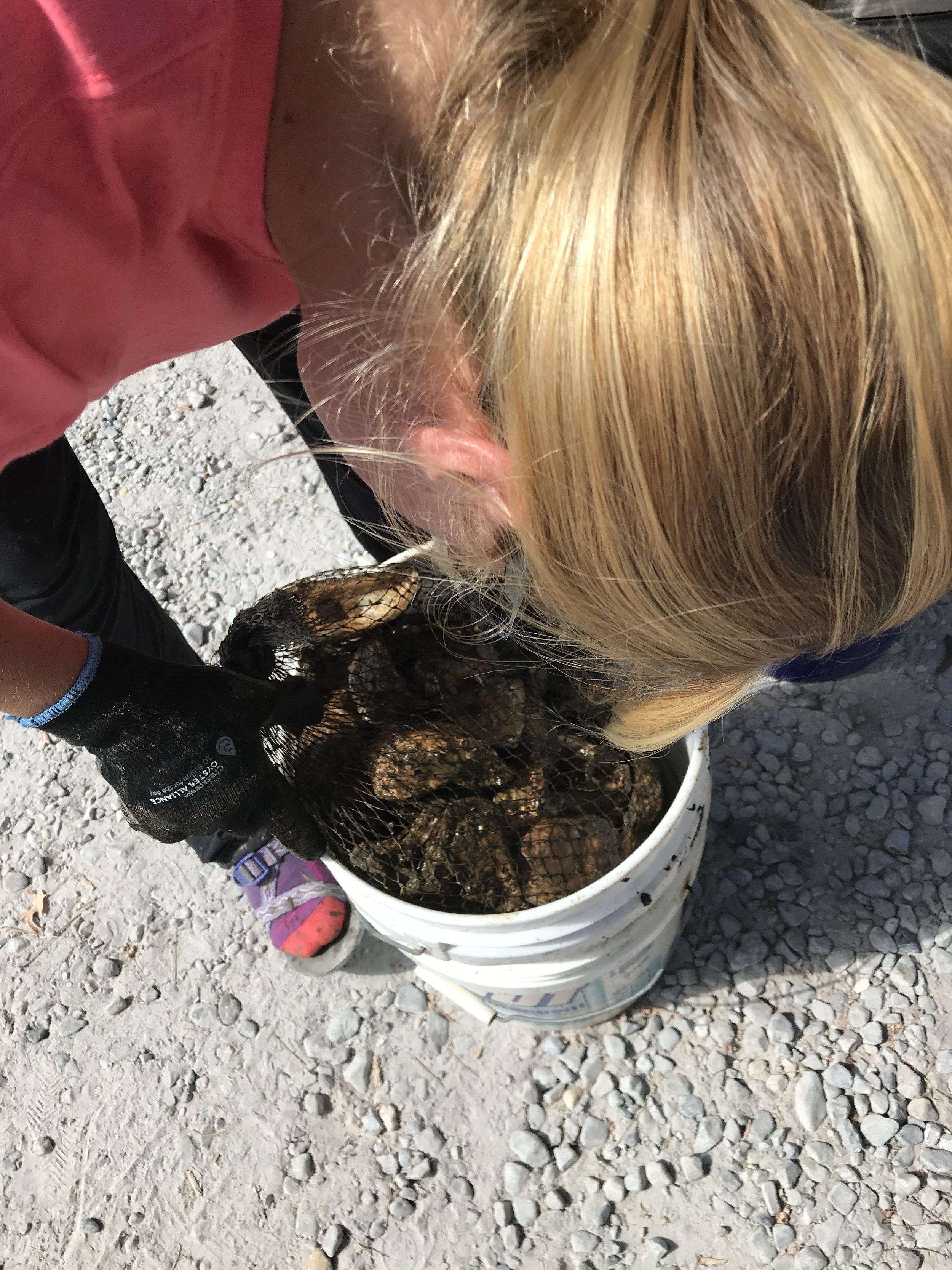 Bucket of Oysters.jpg