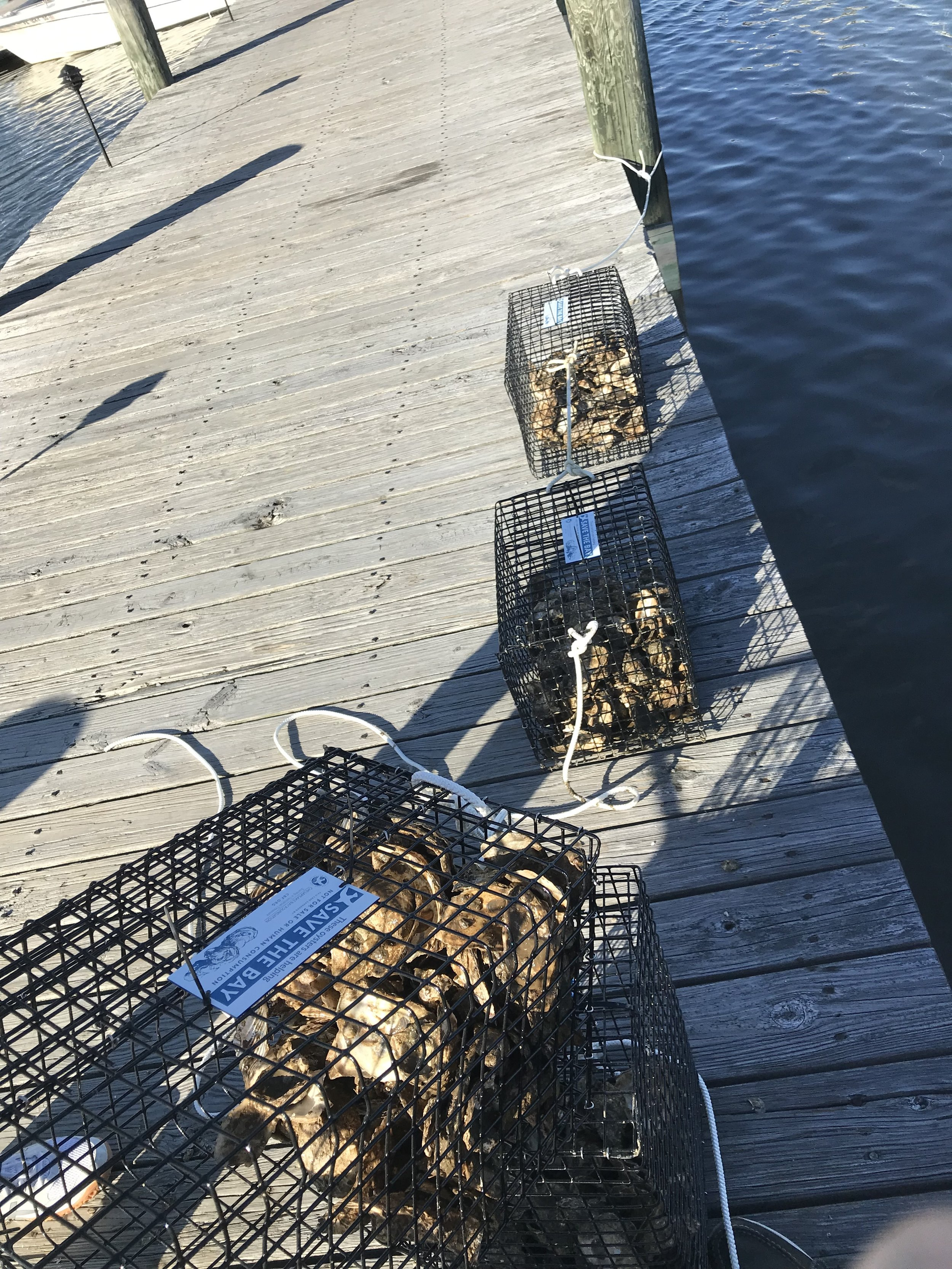 Oyster Cages for Farming.jpg
